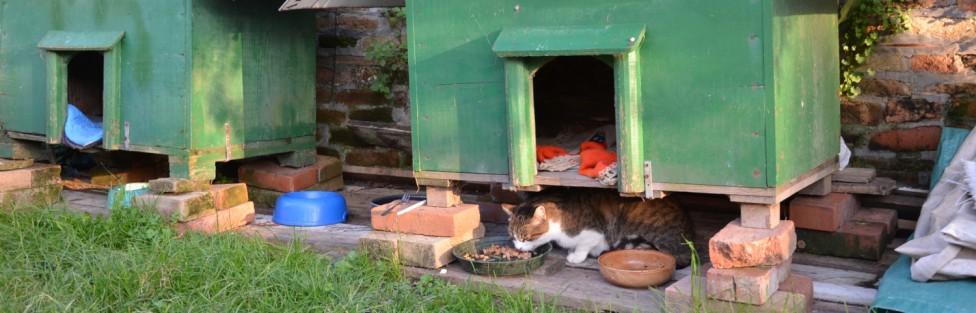 イタリア:トルチェッロ島のにゃんアパート